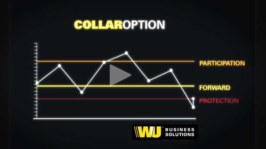 Video: Collar Option